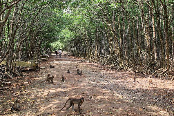 Du lịch Cần Giờ cuối tuần thăm đảo Khỉ