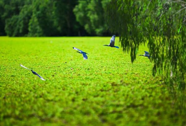 Hình ảnh cho thuê xe du lịch khám phá rừng tràm Trà Sư