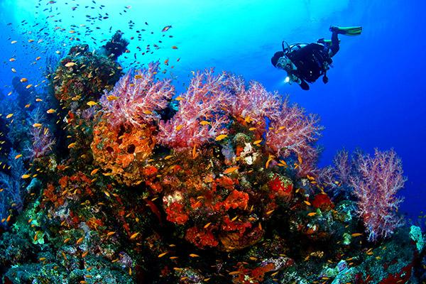 Hình ảnh cho thuê xe du lịch ngắm san hô ở Bình Thuận