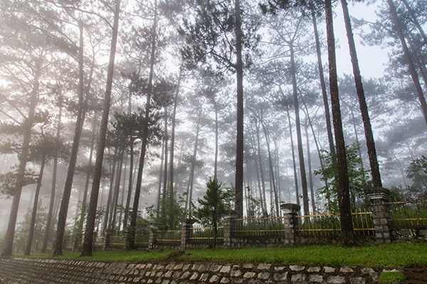 Cho thuê xe du lịch ngắm làng hoa Đà Lạt mùa mây