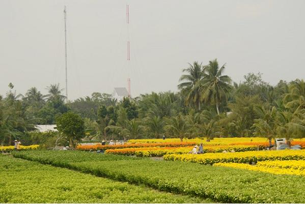 Hình ảnh cho thuê xe du lịch khám phá xứ dừa