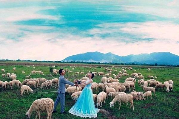Hình ảnh cho thuê xe du lịch khám phá đồng cừu ở Bà Rịa