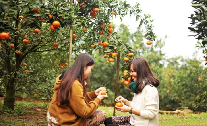 Khám phá vườn trái cây Cái Mơn