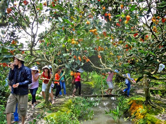 Tham quan vườn trái cây Ba Cống