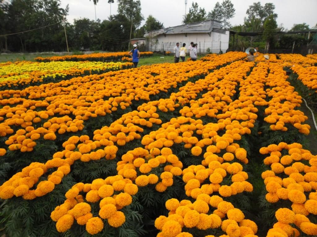 Làng hoa kiểng chợ lách