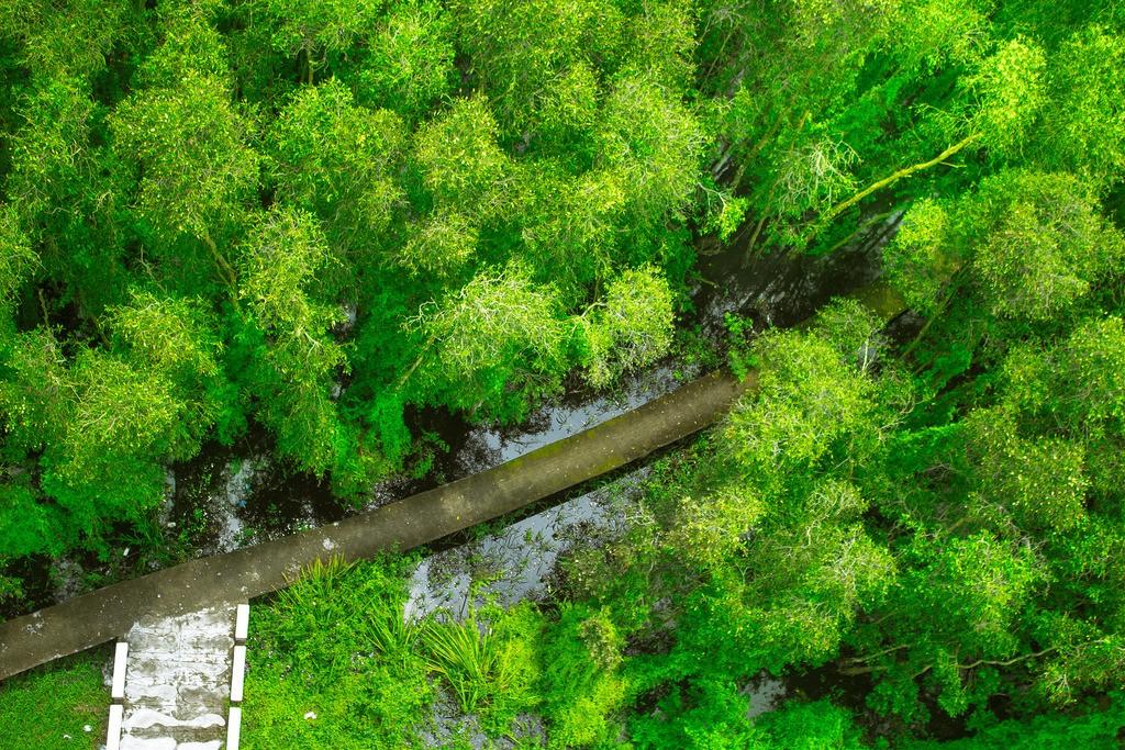 Những con đường quanh co uốn lượn xuyên rừng tràm
