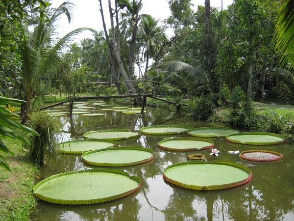 Khu du lịch sinh thái nhà vườn Thảo Nguyên