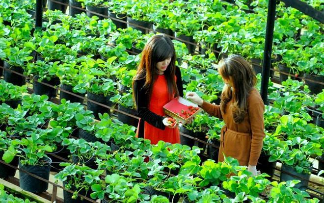 Vườn rau thủy canh Đà Lạt