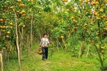 Cho thuê xe du lịch đi miền Tây mùa trái cây Nam Bộ