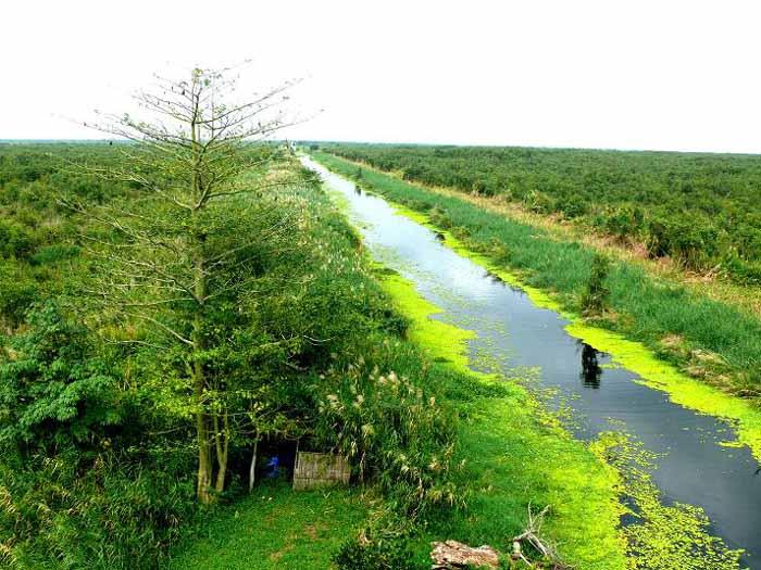 Rừng U Minh Hạ