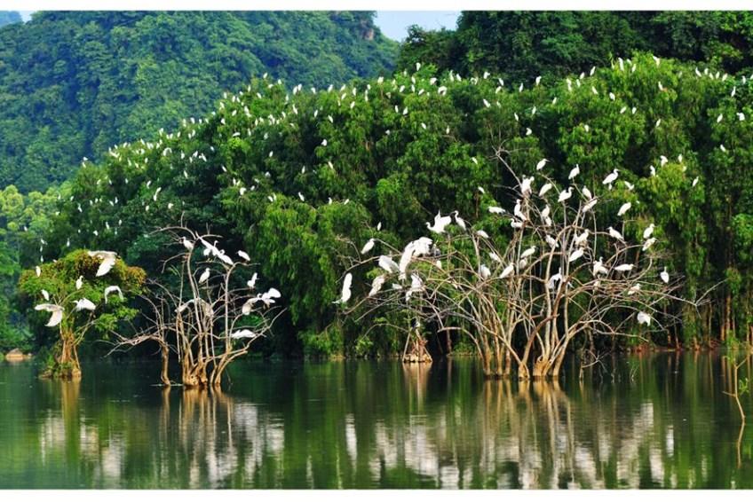 Sân chim Vàm Hồ - Ngôi nhà của của loài cò