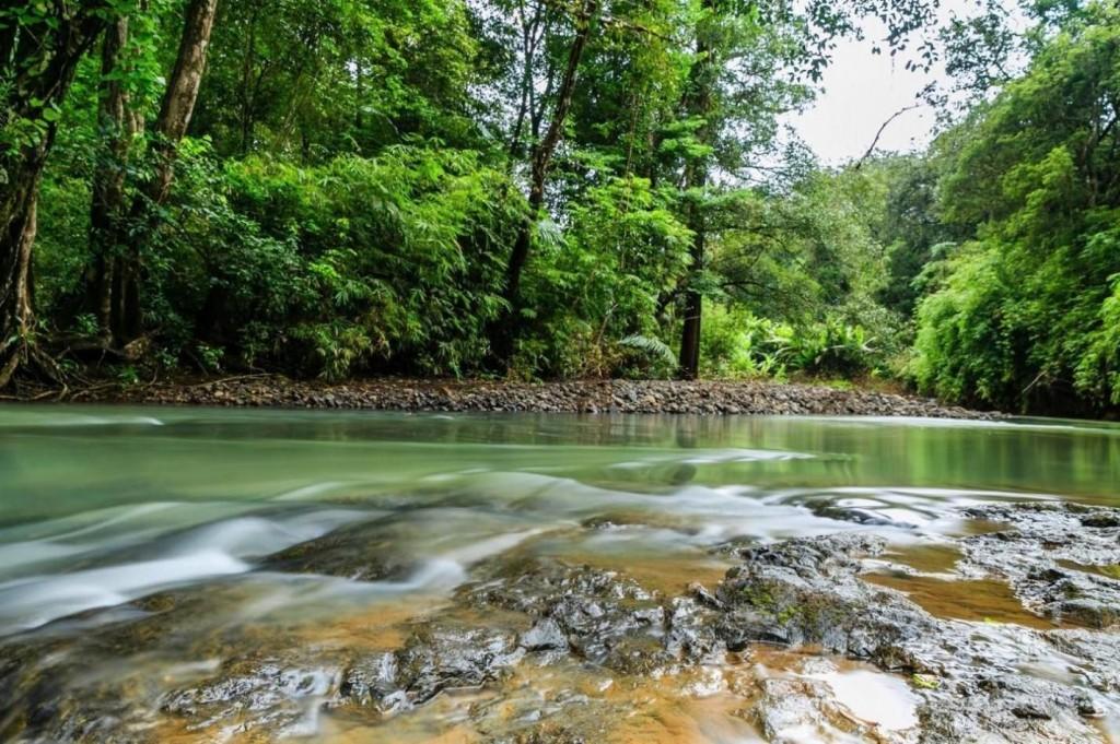 Một góc suối nhỏ trong vắt bên trong Vườn quốc gia Bù Gia Mập